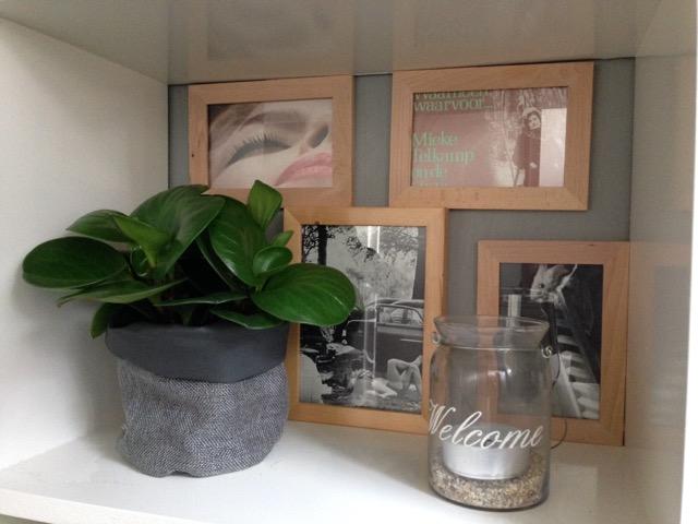 Blog Styling ID Het effect van Feng Shui in huis plant in de hal