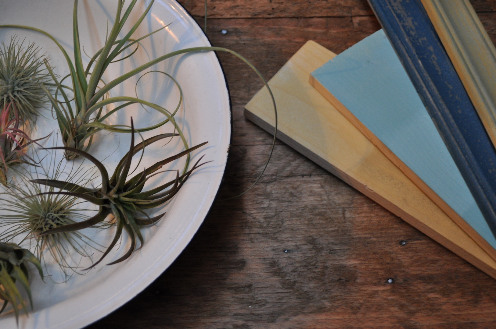 Styling ID Blog: Shopping Madness! Nature and Vintage Air Plants