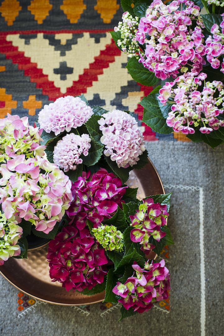 Interieurstylen met de Hortensia kleurrijk