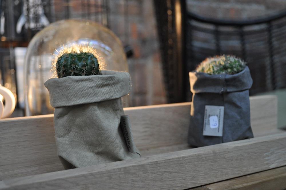 Styling ID beurzen en evenementen feelgood & shopevent in Veghel cactus