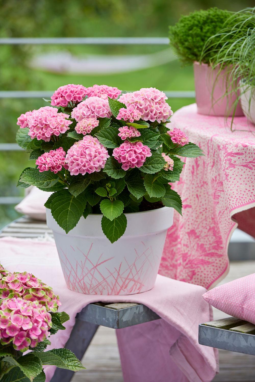 Styling ID Tips & Trends Magische hortensia's kleuren het seizoen 1