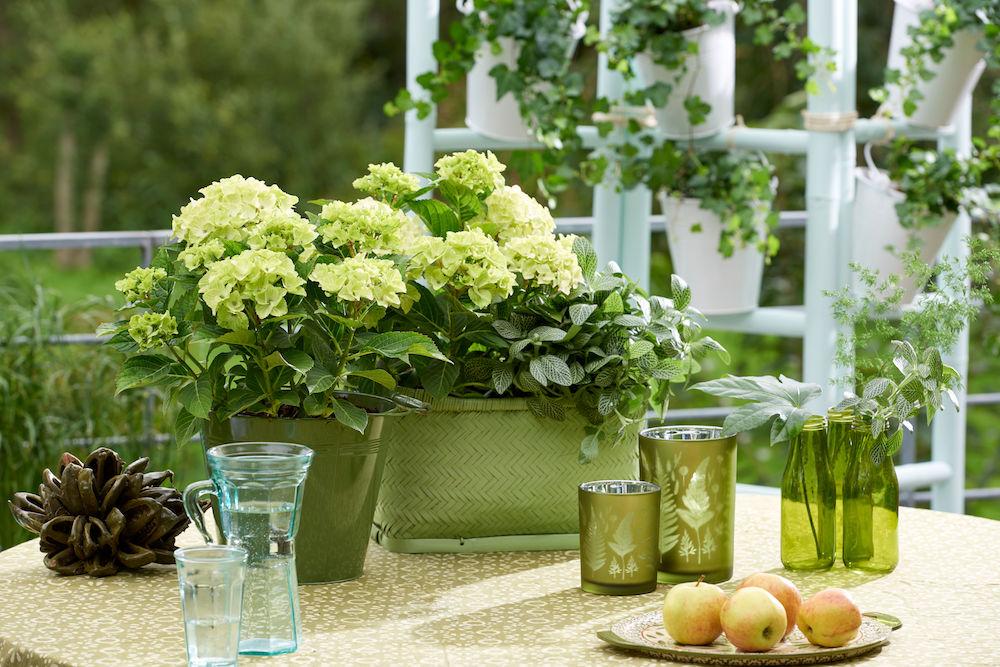 Styling ID Tips & Trends Magische hortensia's kleuren het seizoen 4