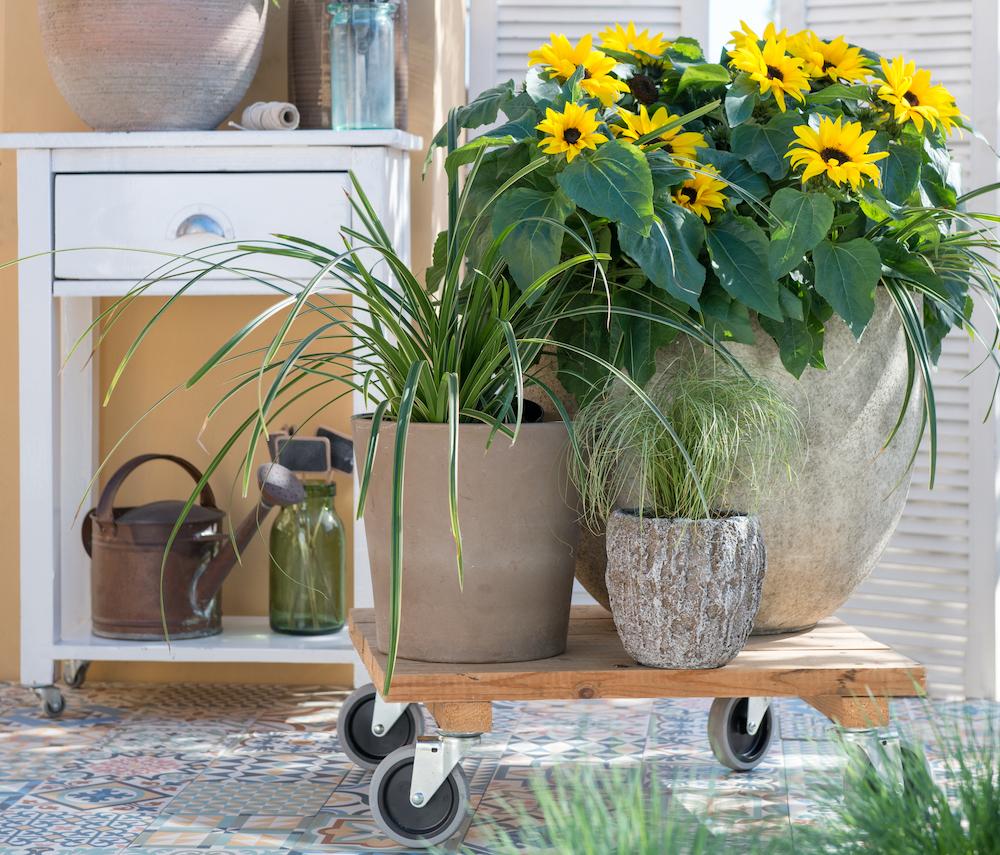 Styling ID blog 5 praktische tips voor nog meer tuinplezier verrijdbare tuintjes