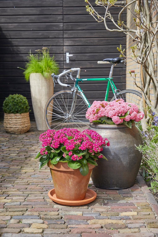 Styling ID Tips en Trends De ideale terrasplant is de Kalanchoë Garden 3