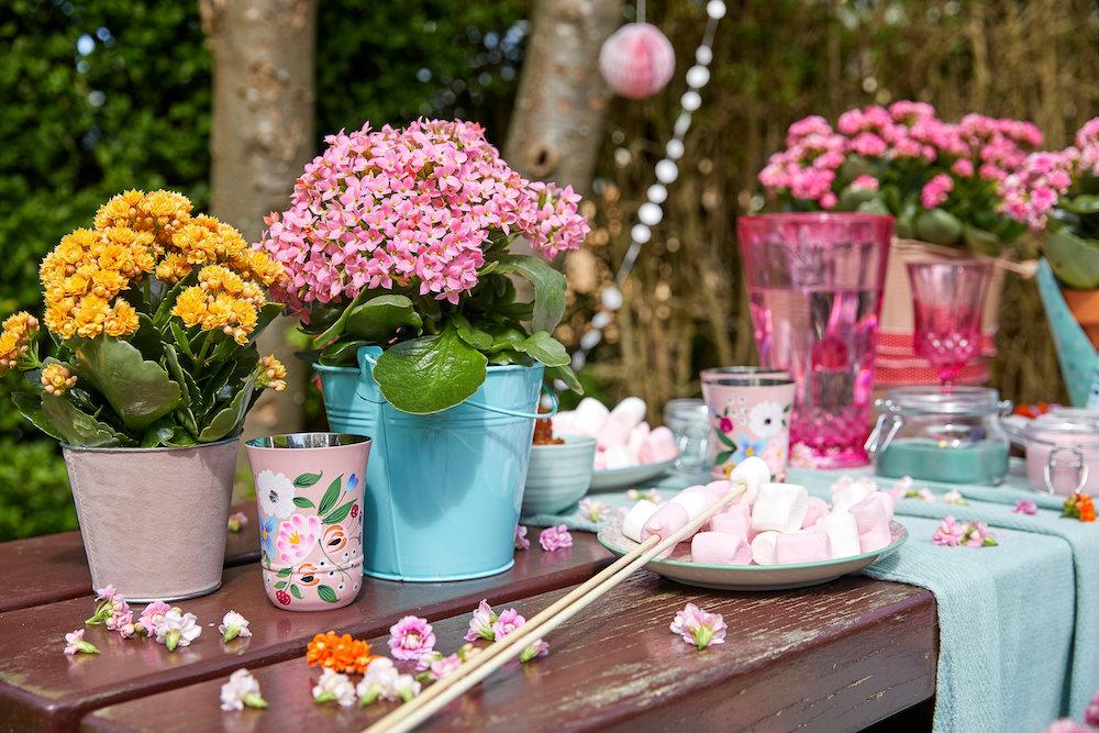 Styling ID Tips en Trends De ideale terrasplant is de Kalanchoë Garden 4