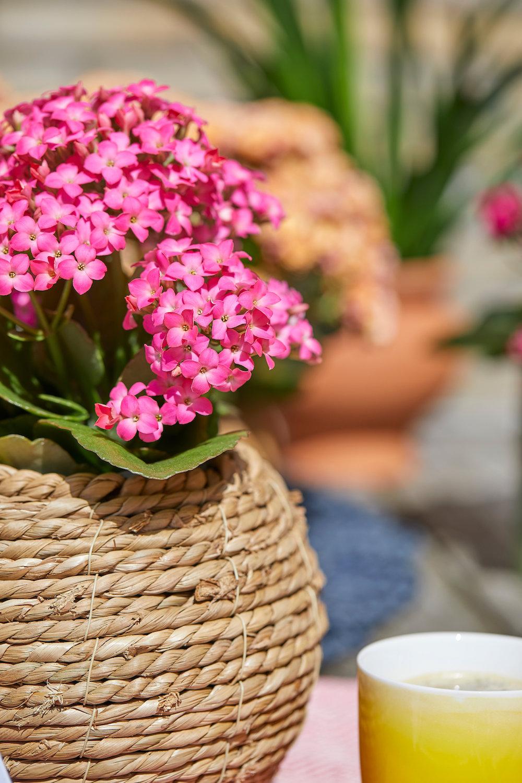 Styling ID Tips en Trends De ideale terrasplant is de Kalanchoë Garden 7