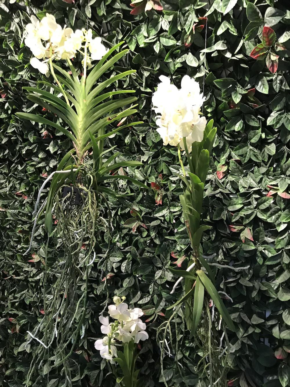 Styling ID Blog Orchideeen zijn hip en maken happy 2