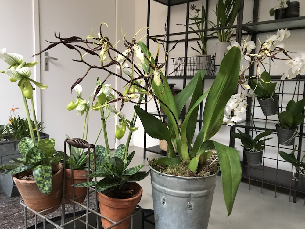 Styling ID Blog Orchideeen zijn hip en maken happy 4
