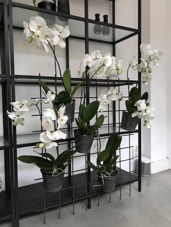 Styling ID Blog Orchideeen zijn hip en maken happy 17