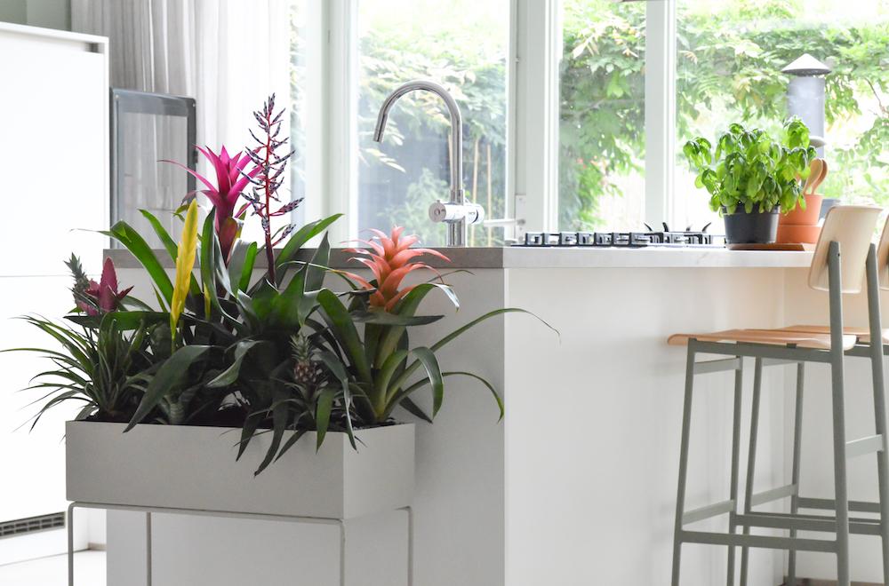 Styling ID Tips en Trends Groene trend- met kamerplanten een binnentuintje creeeren 4