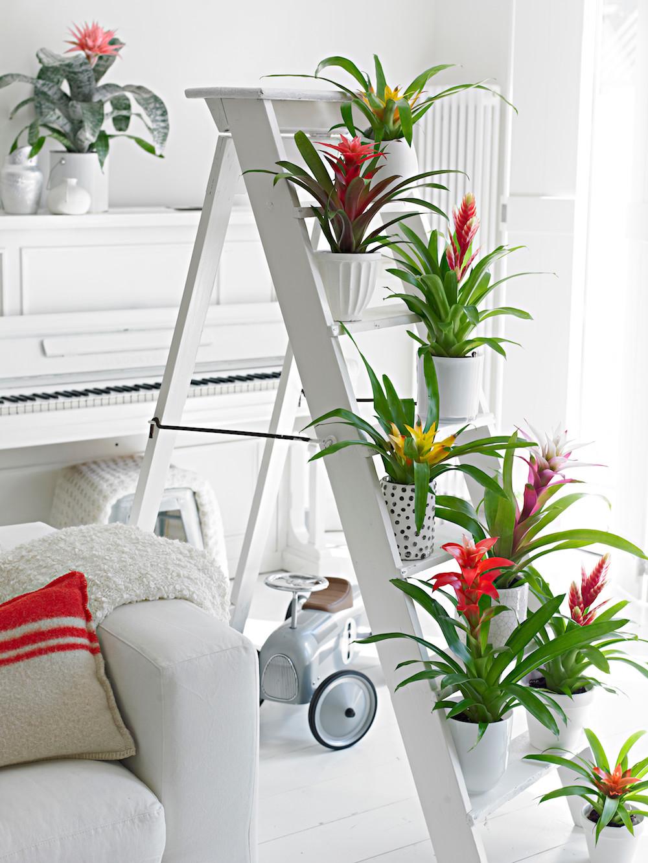 Styling ID Tips en Trends Groene trend- met kamerplanten een binnentuintje creeeren 6