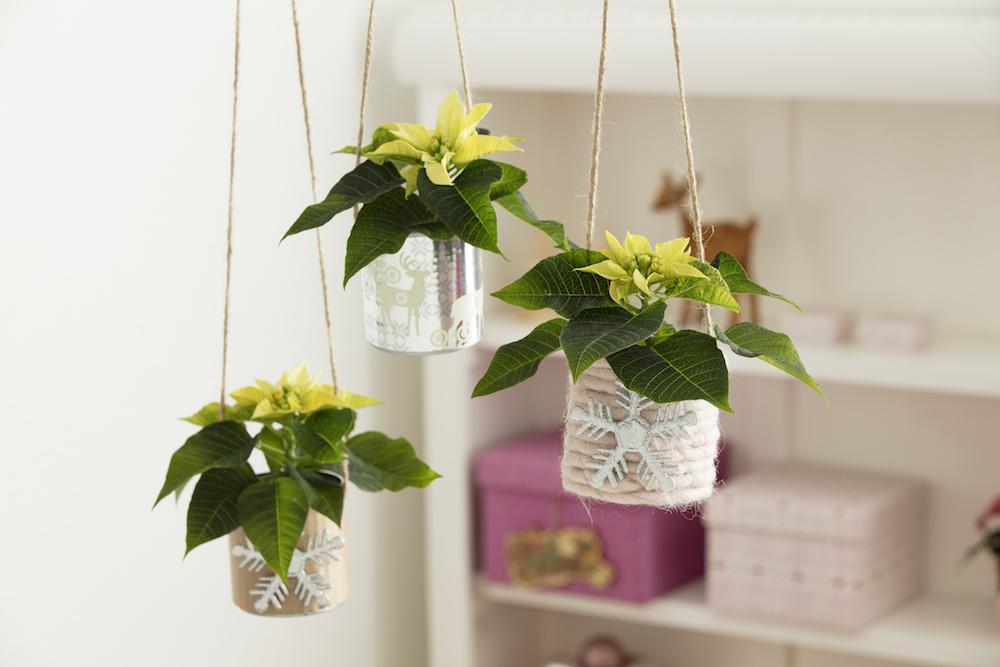 Stralende mini plantjes voor binnen