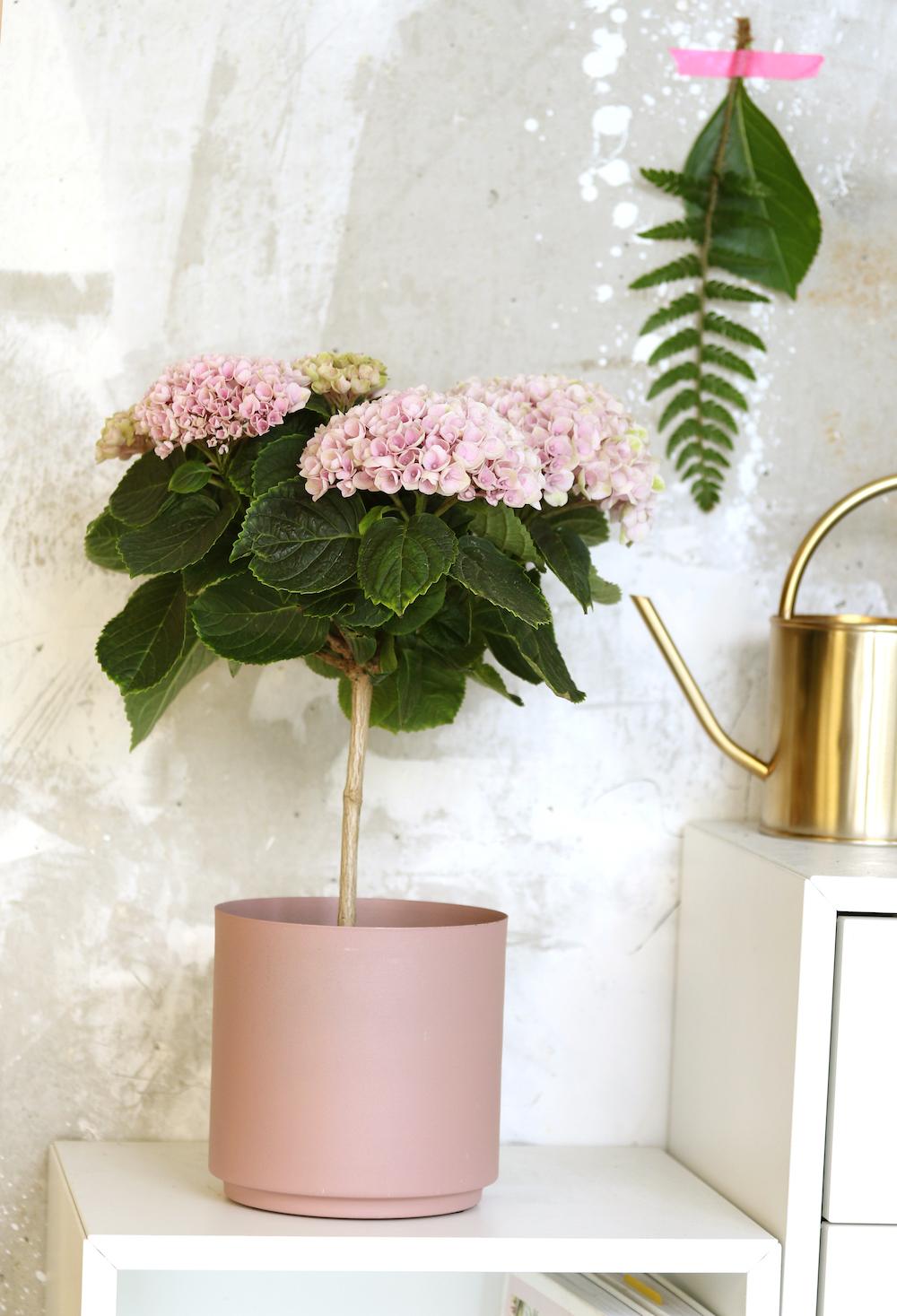 Styling ID tips en trends, Nieuw voor binnen- De Hortensia in de vorm van een boompje 2