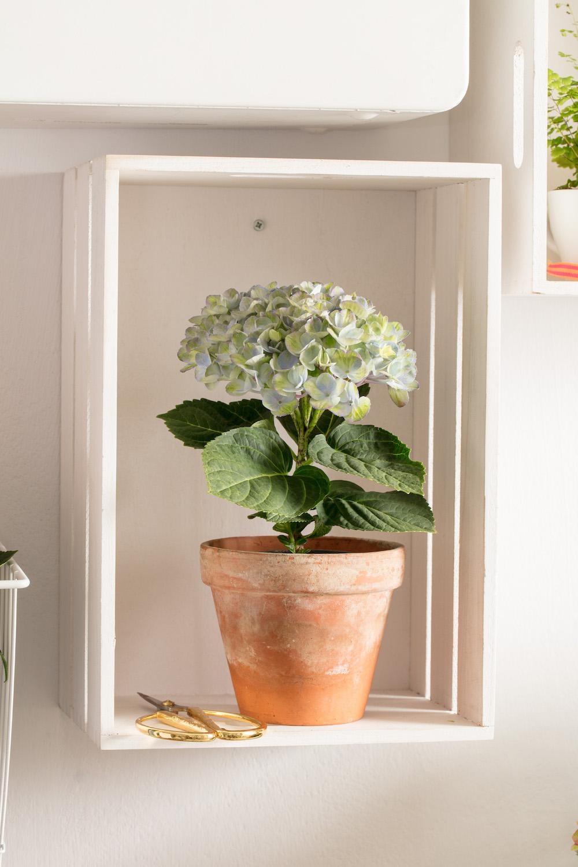Styling ID tips en trends, Nieuw voor binnen- De Hortensia in de vorm van een boompje 4