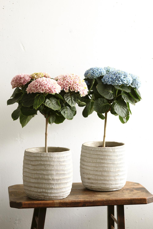 Styling ID tips en trends, Nieuw voor binnen- De Hortensia in de vorm van een boompje 5