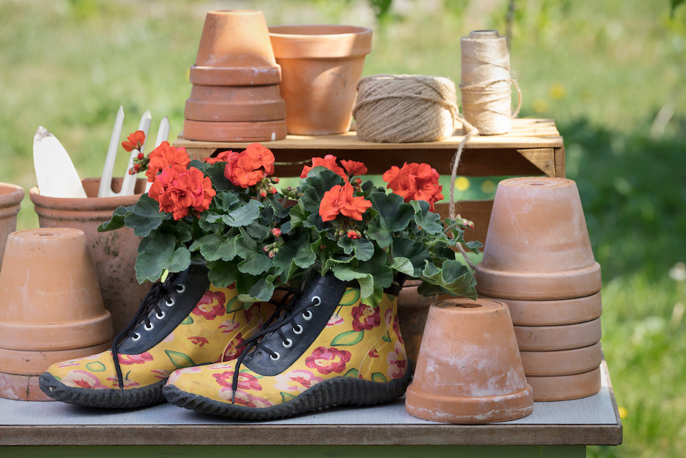 Styling ID Tips en Trends Kweek een bloemenparadij met Geraniums 11