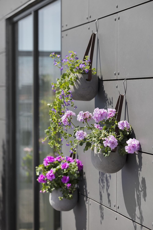 Styling ID Tips en Trends Kweek een bloemenparadij met Geraniums 12