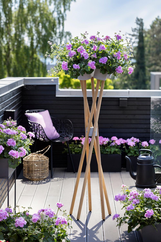 Styling ID Tips en Trends Kweek een bloemenparadij met Geraniums 7