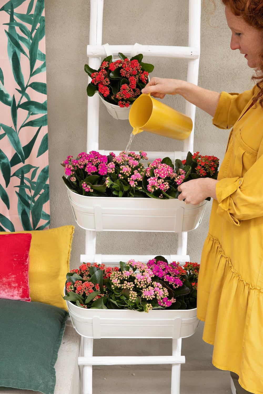 Styling-ID-Tips-en-Trends-Kalanchoe-kleurrijk-en-makkelijk-te-onderhouden-3