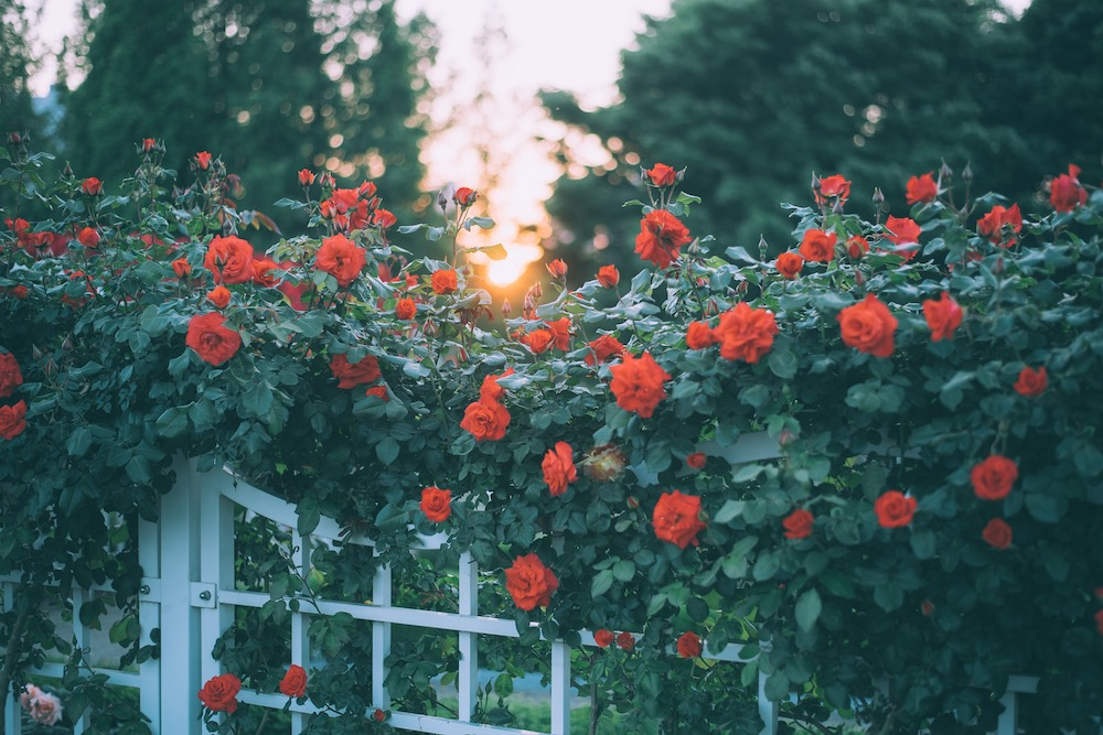 Styling ID Huis en Tuin De verschillende manieren om je tuinoverkapping in te richten