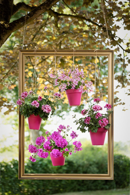 Zwevende geraniums een feest voor het oog