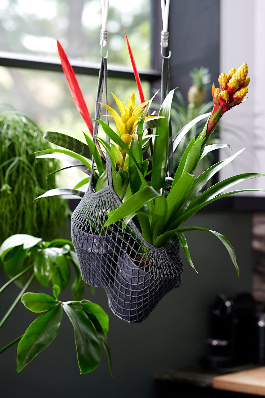 plantjes-van-de-vloer 6